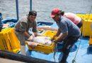 Produce: Volumen de las exportaciones pesqueras creció en 9.9% el 2019 y superó las 1.81 millones de toneladas
